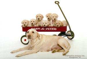 Ali with pups in wagon