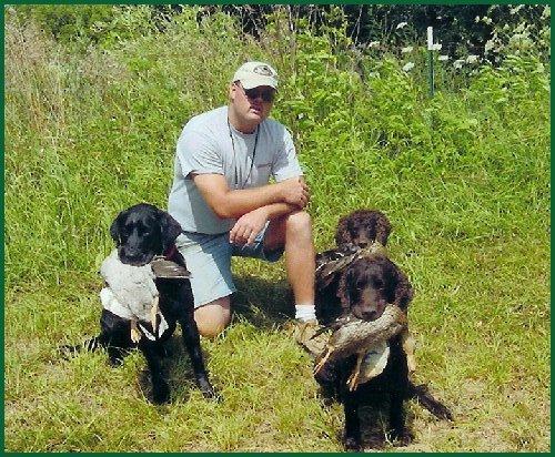 Hunting Dog Training Madison Wi