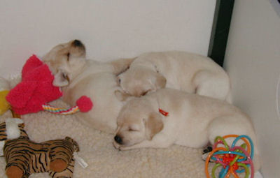 pups sleeping